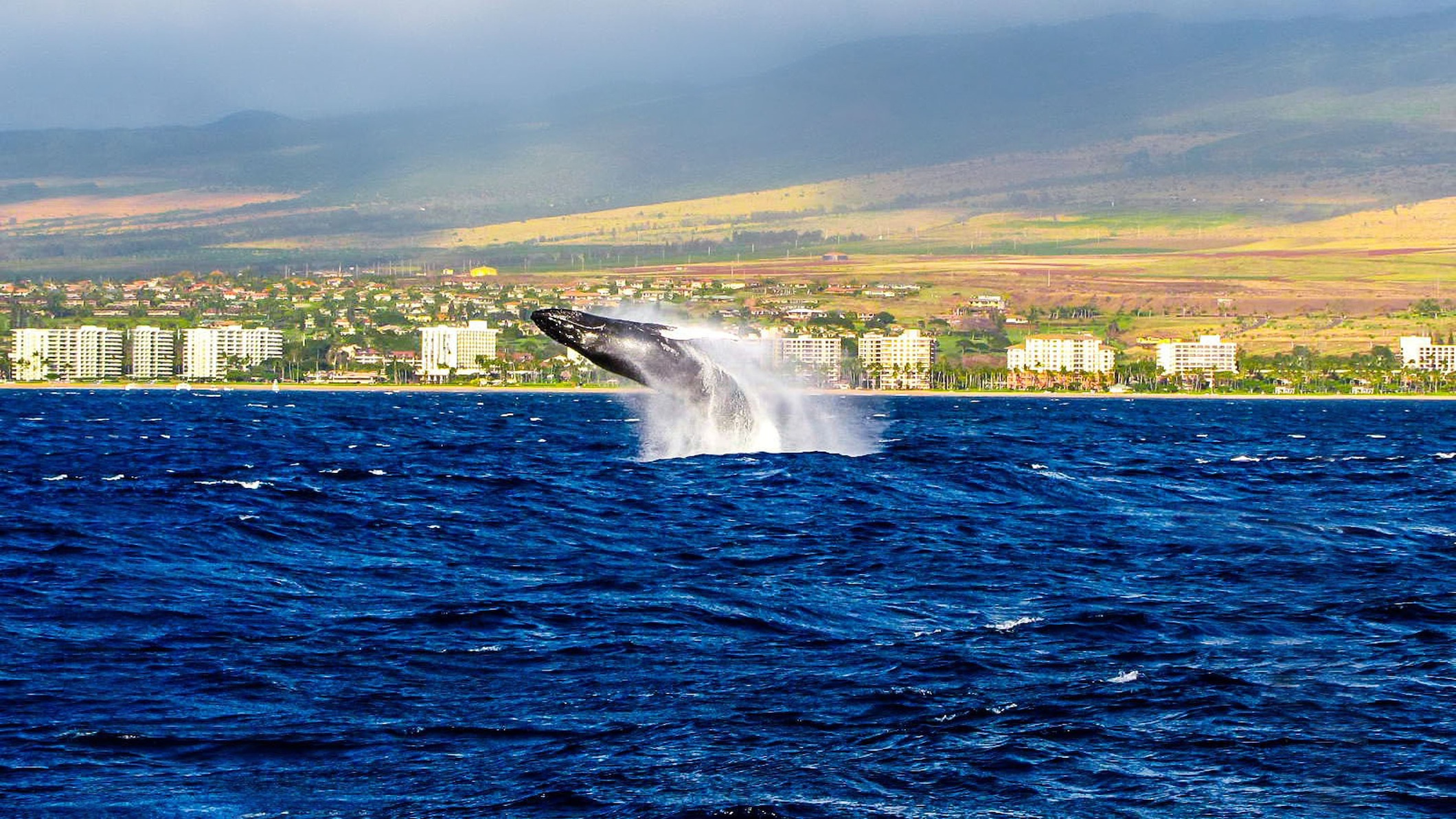 Hawaii - Kaanapali Coast Whale.jpg