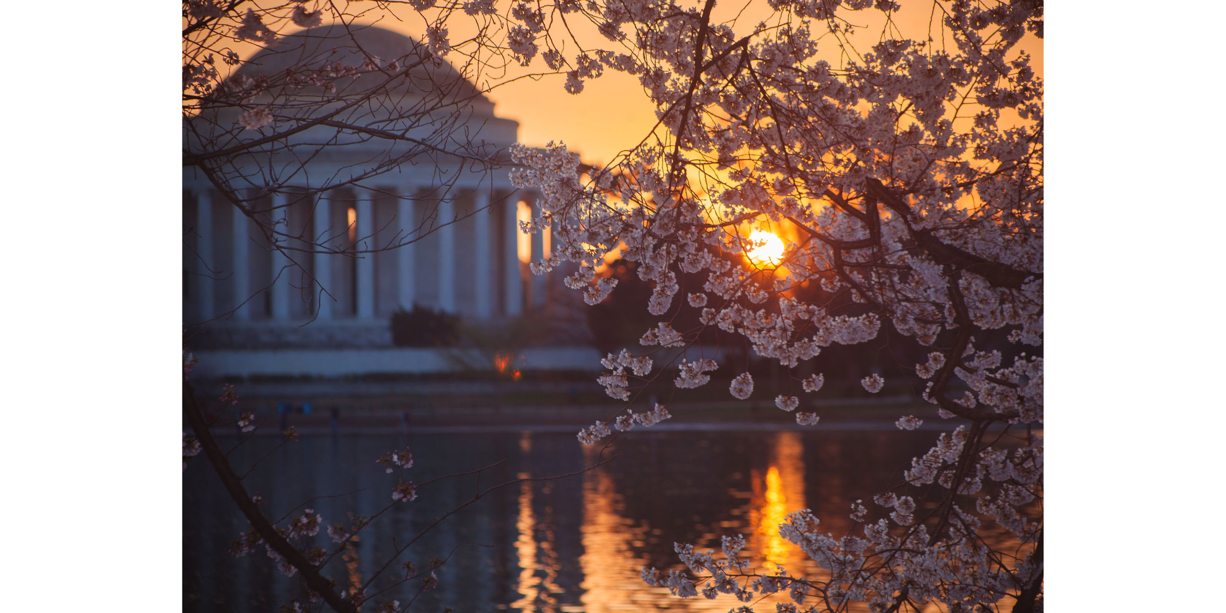 Cherry Blossoms DC 2019 - 004.jpg