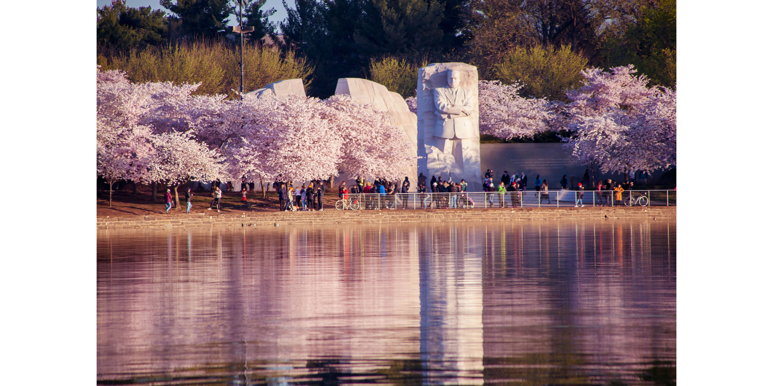 Cherry Blossoms DC 2019 - 003.jpg