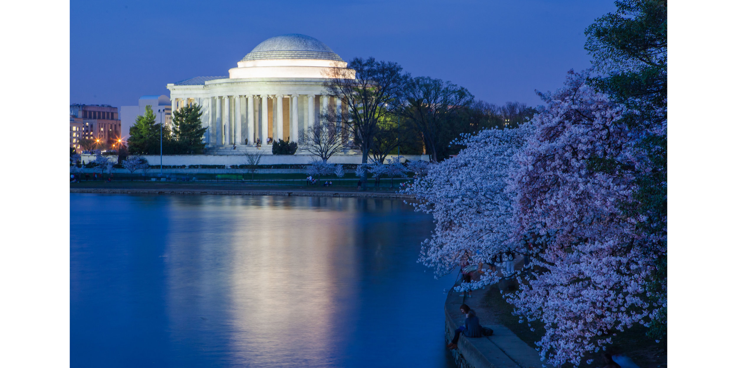 Jefferson Night Blossoms (1).jpg