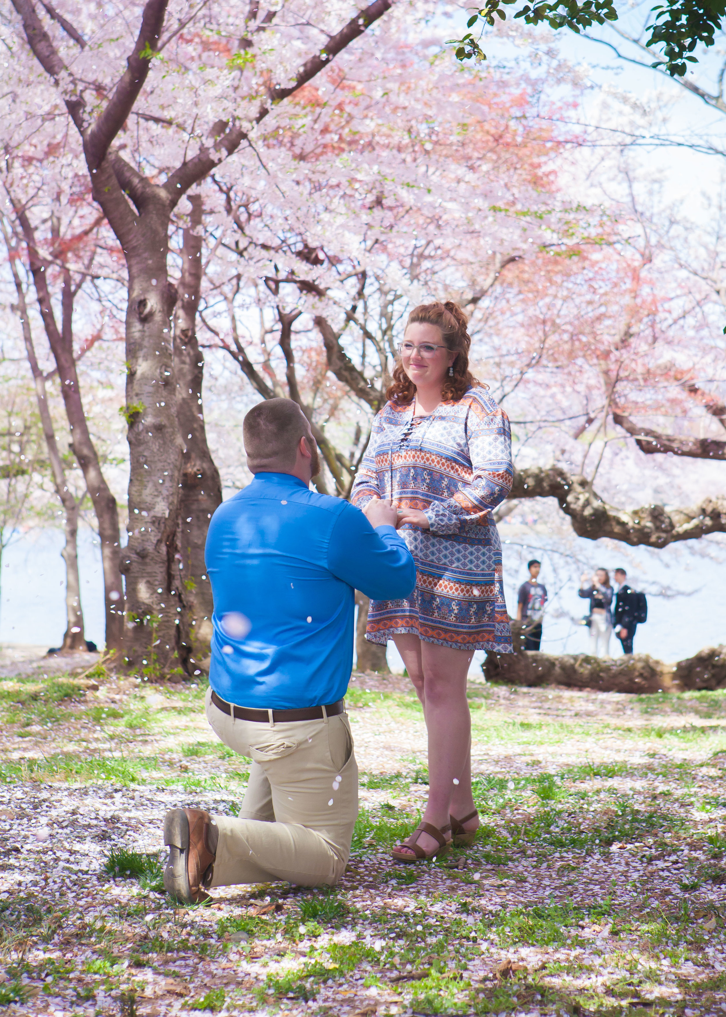 Surprise Proposal At The Cherry Blossom Festival Lincoln Photography,3 Bedroom Houses For Rent In Omaha Nebraska