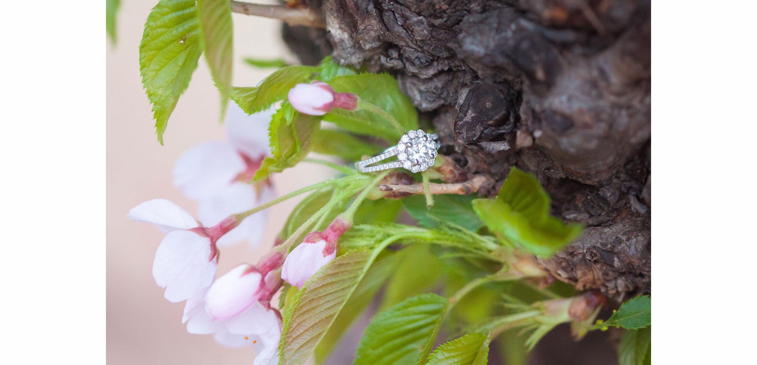 *Donal & Fernanda Cherry Blossom Portraits - 007.jpg