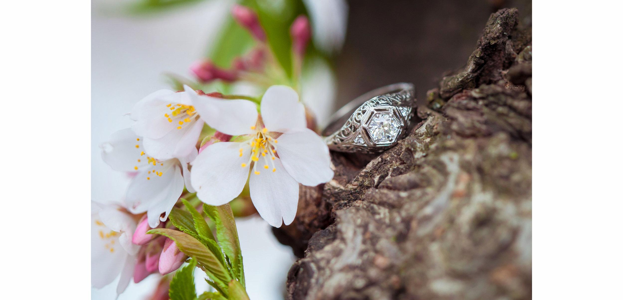 *Ryan & Rachel Cherry Blossom Proposal - 007.jpg