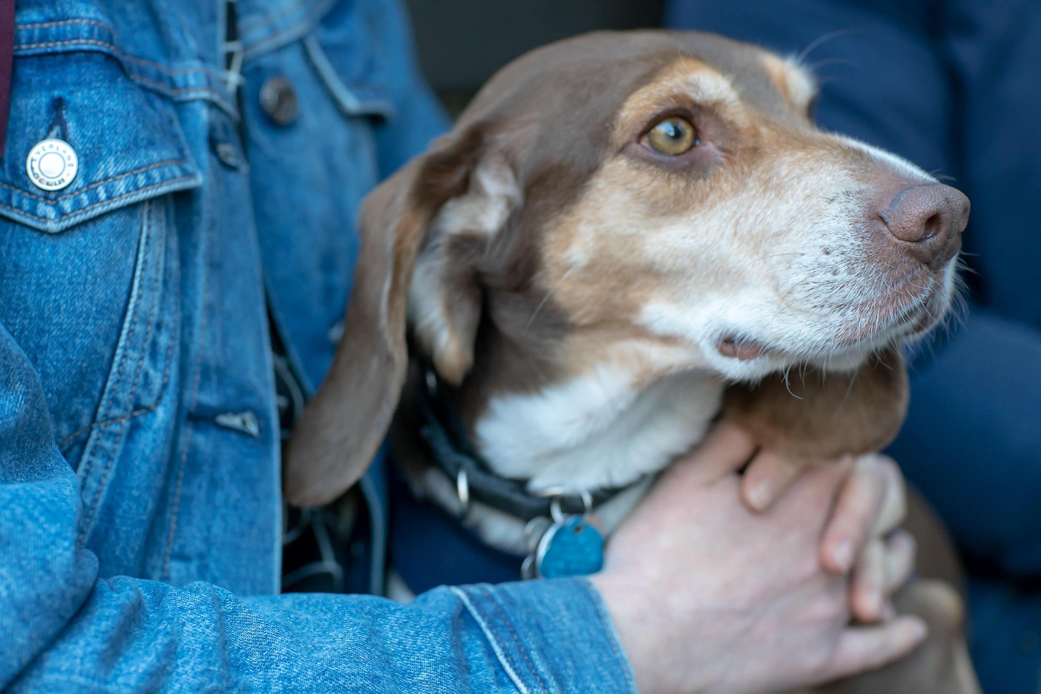 dog of covenhoven