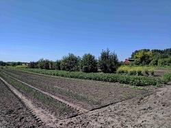 Happy Acres Upick- blog.jpg