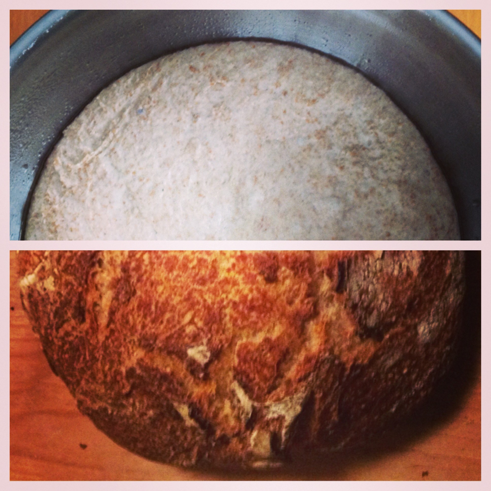 whole wheat sourdough starter/bread