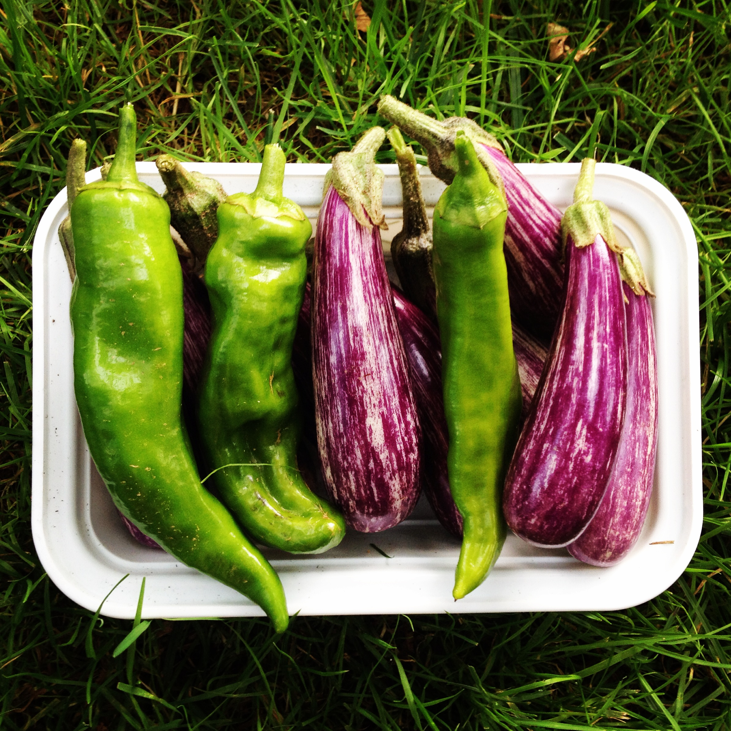 italian peppers fairytale eggplants