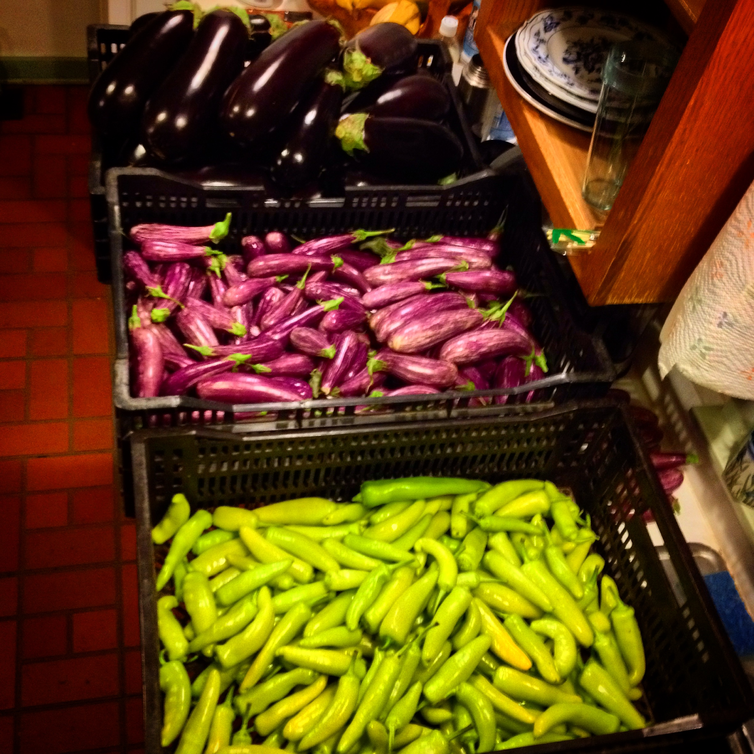 68lbs italian eggplants fairytale eggplants hungarian wax peppers