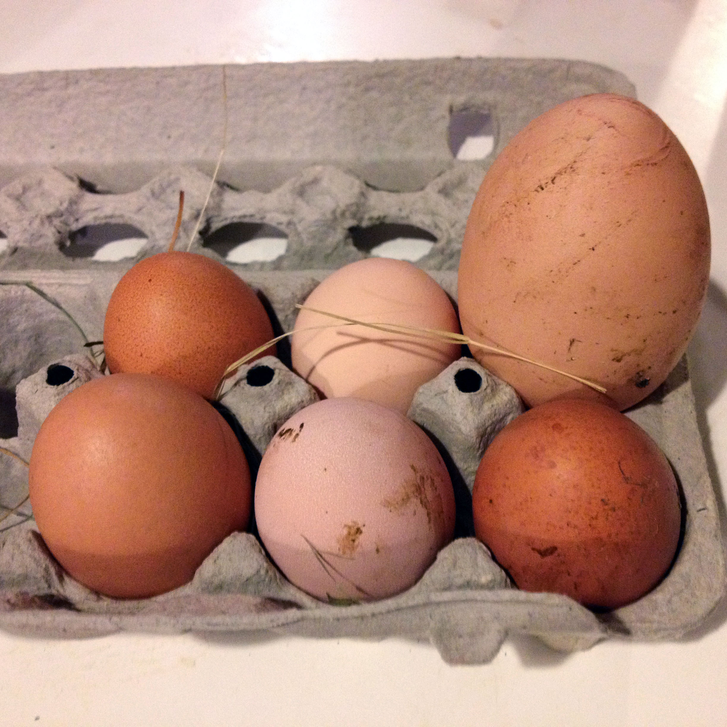 yes they are all chicken eggs!