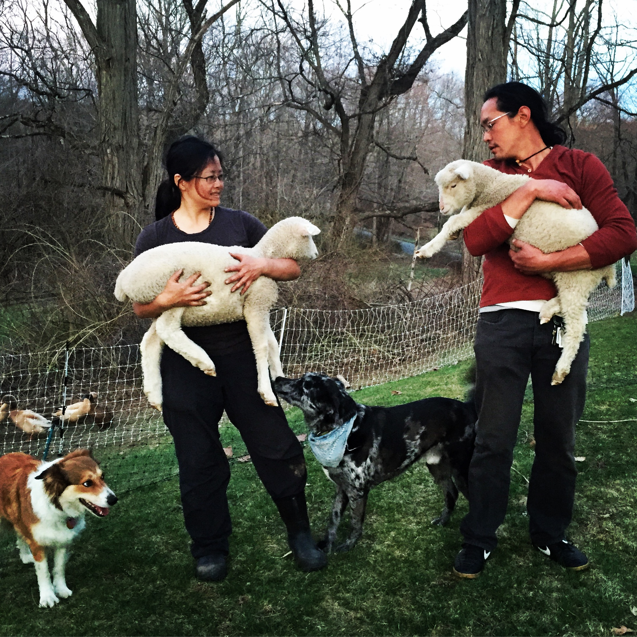 Farmer Betsy, Farmer Wilson, Seneca, Summit & the lamb