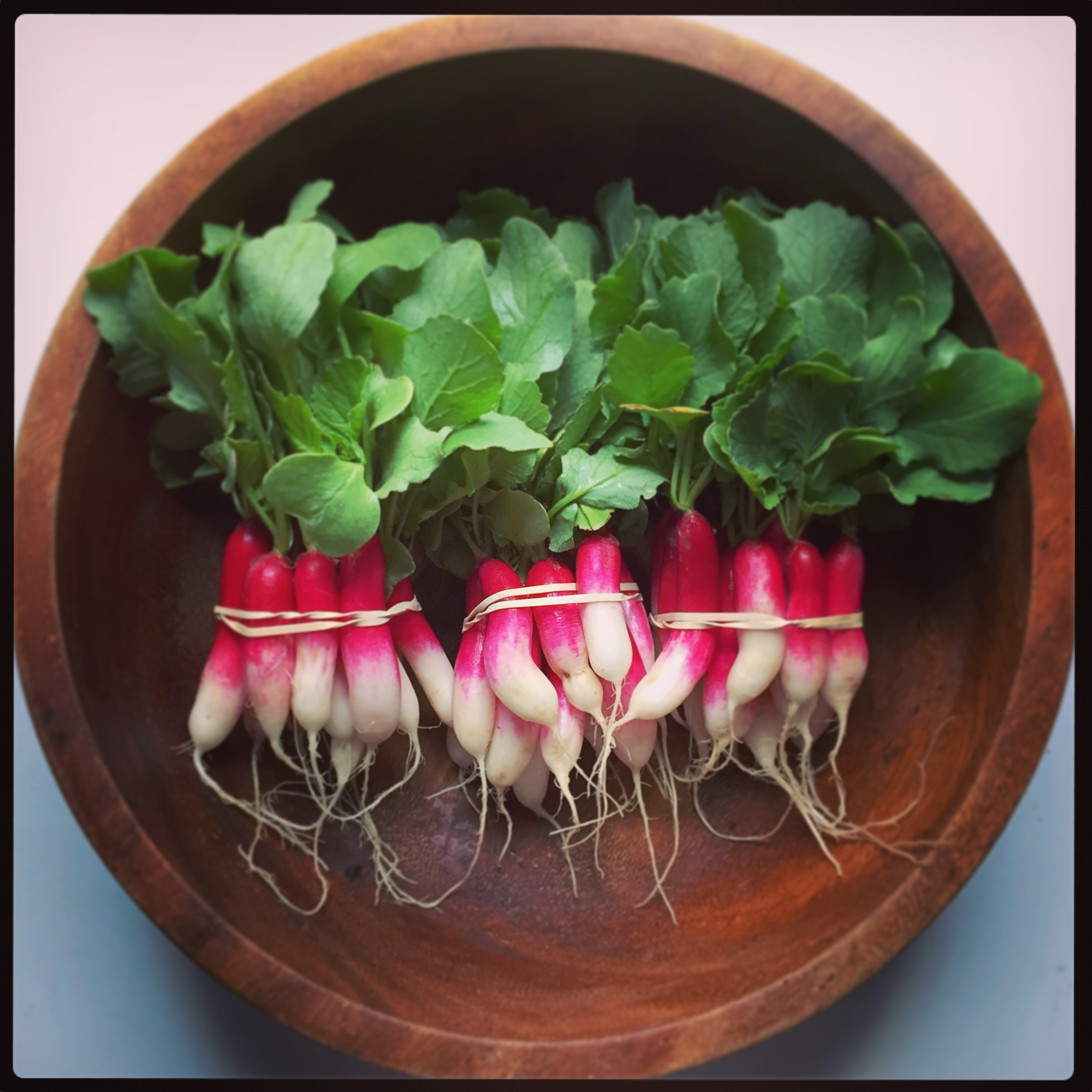 d'vignon  (french breakfast) radishes