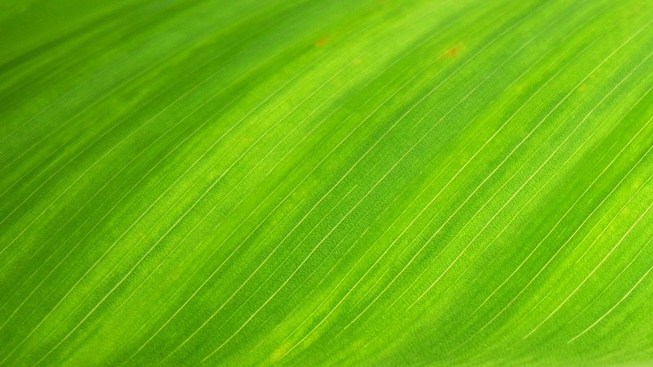 green-leaf-bkbd.jpg