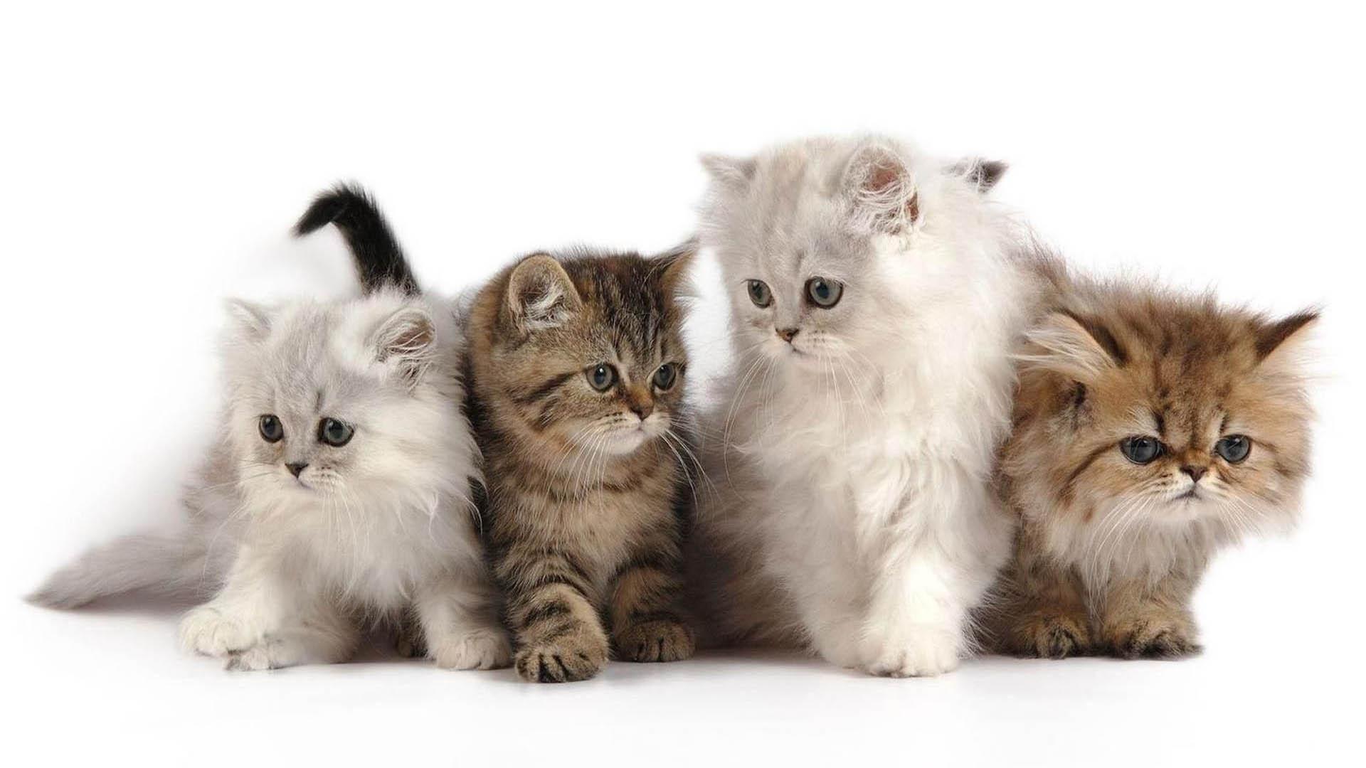 Cat-Wallpaper_33.jpg