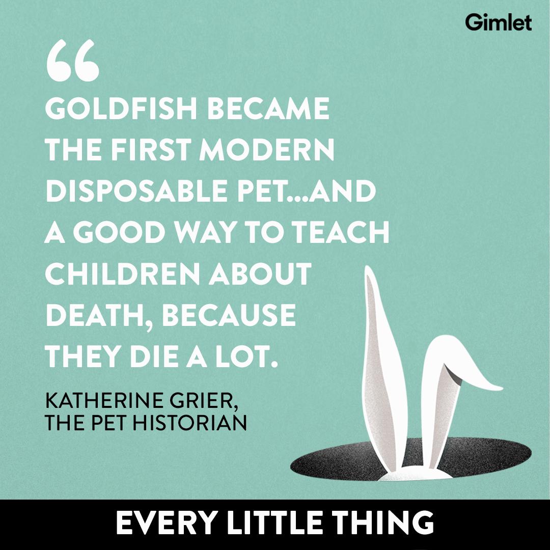 ELT_Goldfish_Quote_1080x1080.png