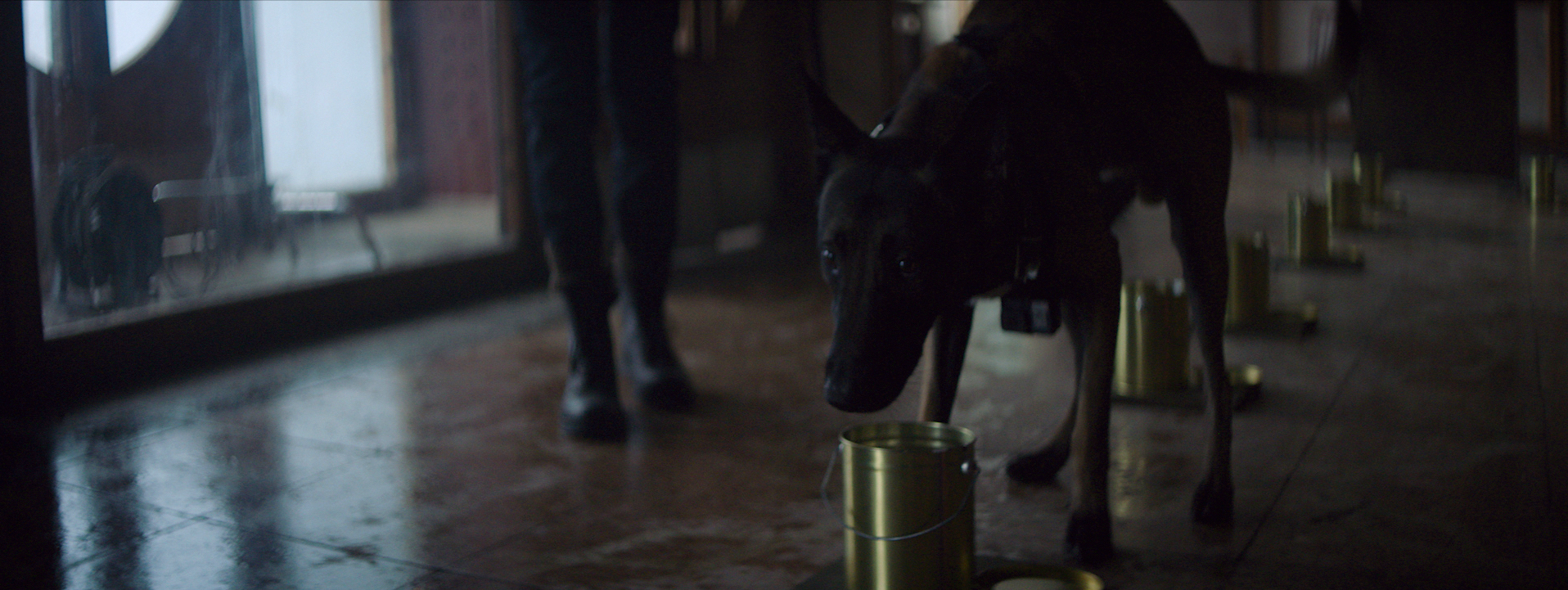 DOGS - ALL FOOTAGE.00_04_30_06.Still040.jpg