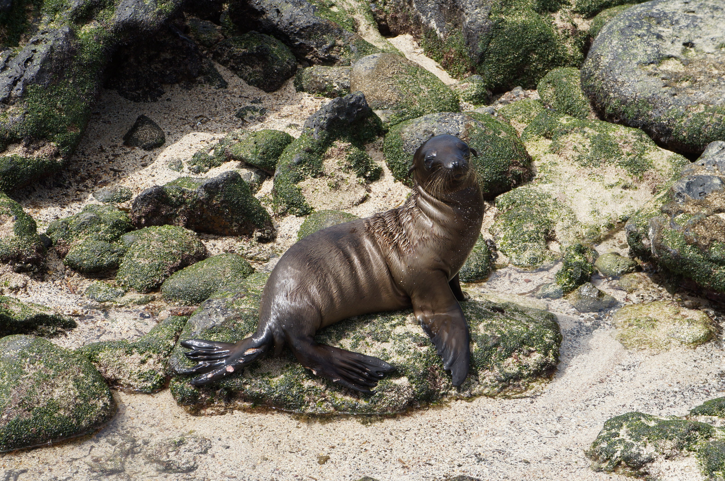 Ecuador MVI Galapagos (16).JPG