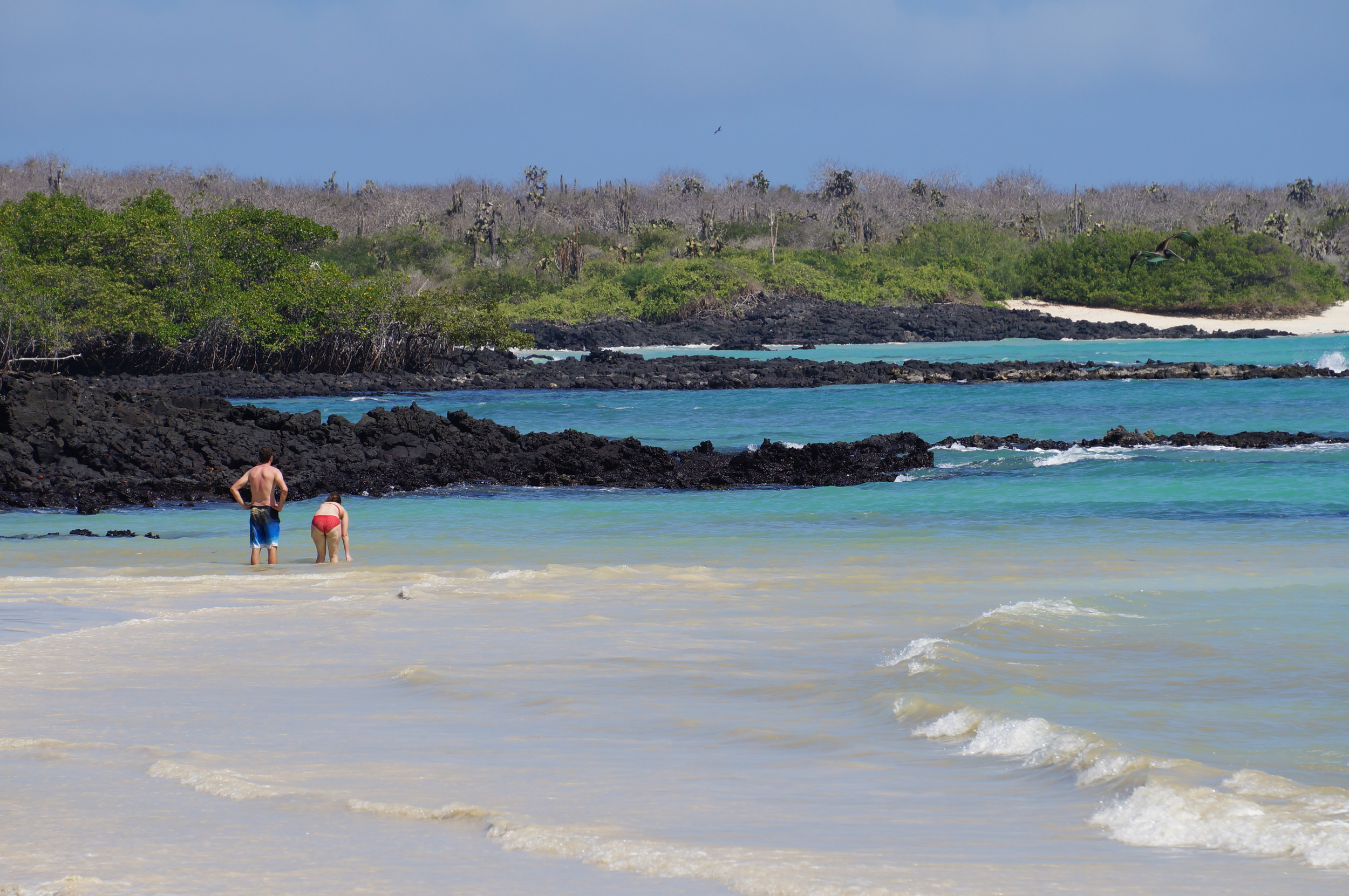 Ecuador MVI Galapagos (18).JPG