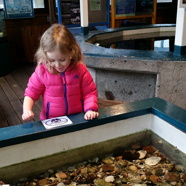"""Marine Life Center is the perfect quick afternoon activity if your in the """"big city"""""""