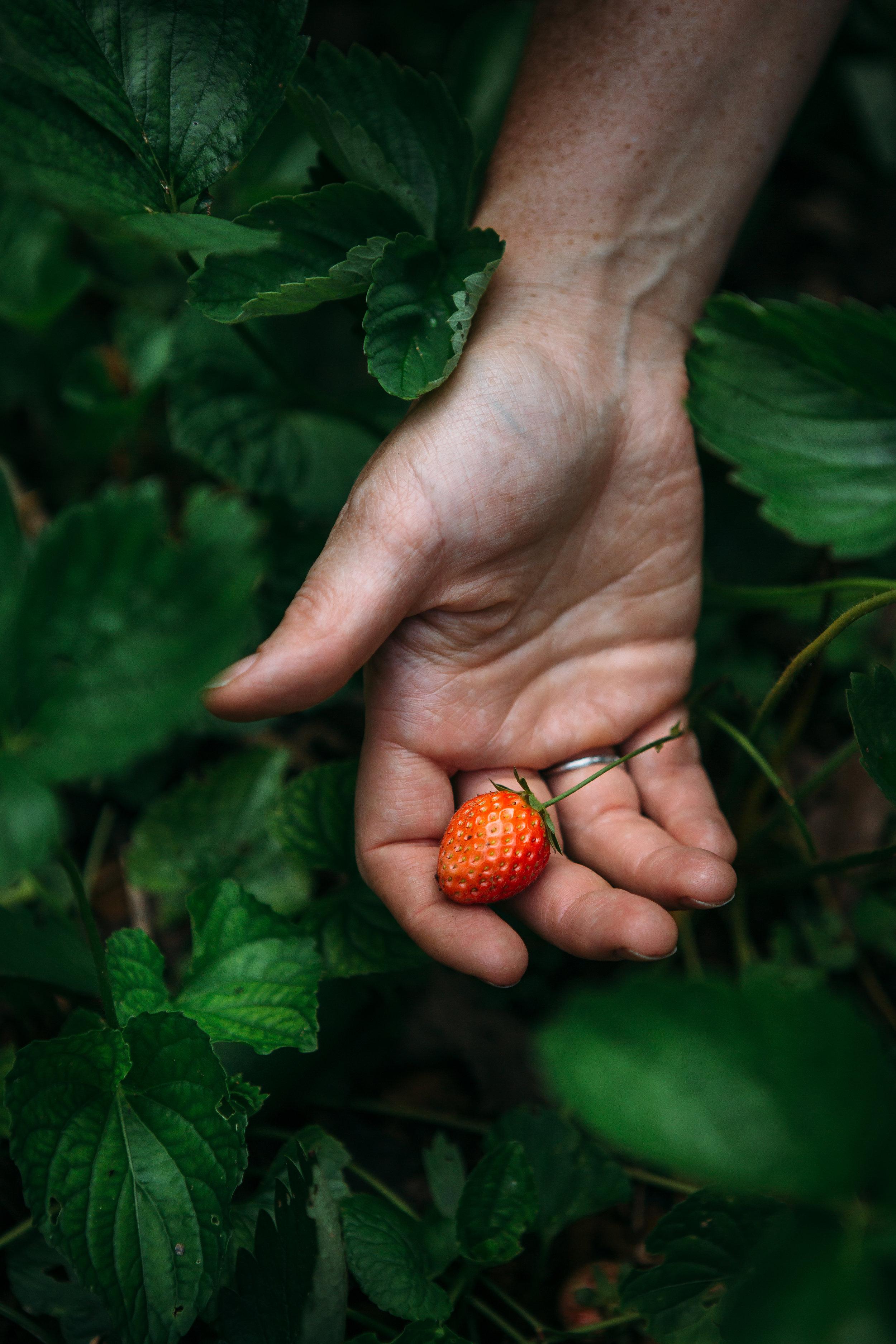 garden-rachel-5230.jpg