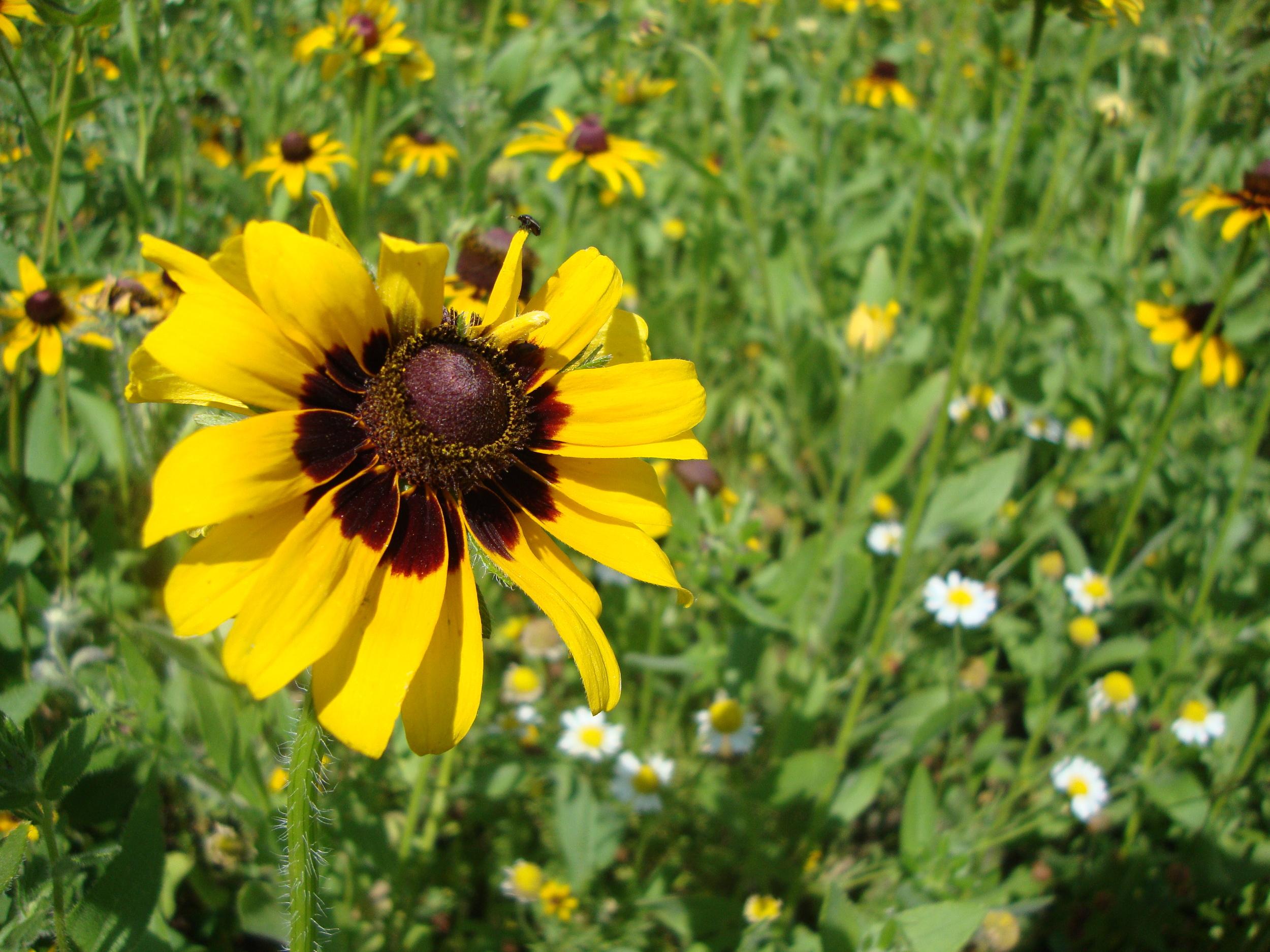shakerhikeyellowflower.jpg