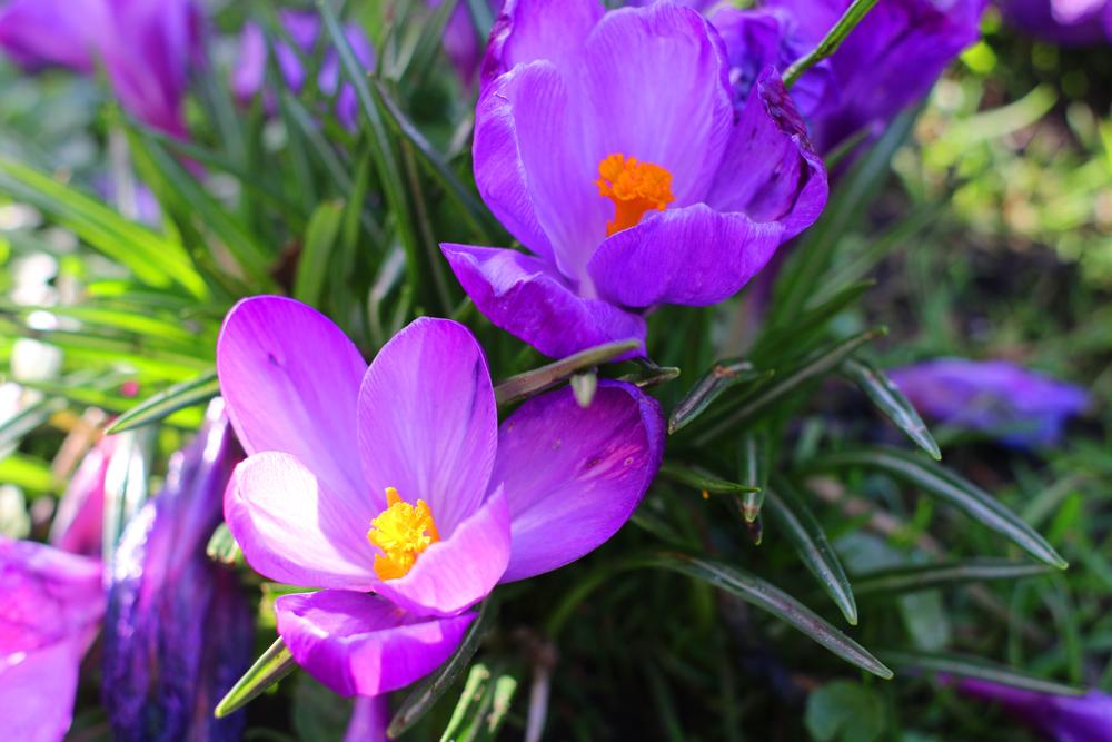 Yoga to Celebrate Ostara - The Spring Equinox