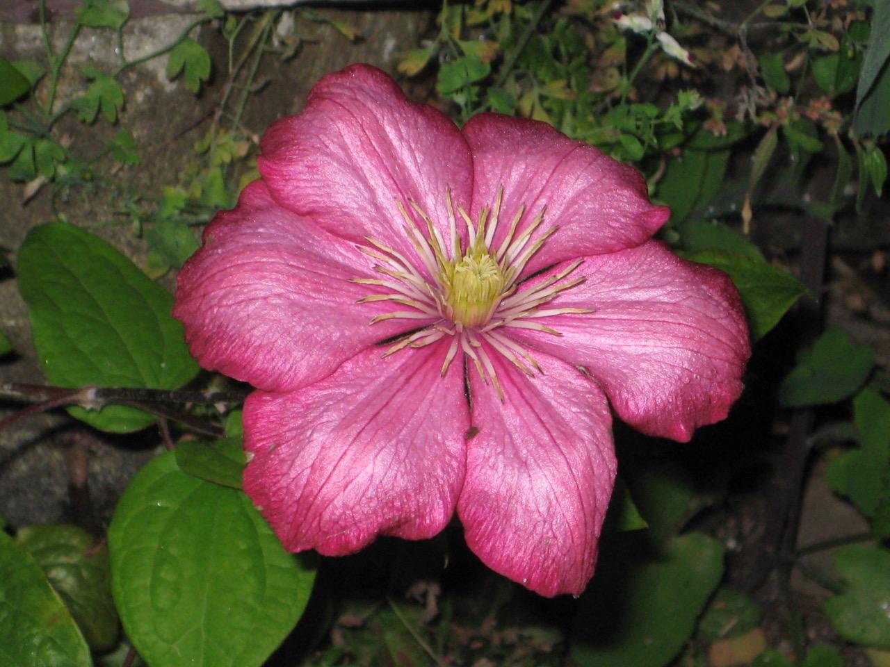 Beautiful flower.jpeg