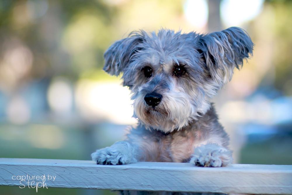 Stephanie Alys Photography | Prada | Cypress, Texas Pet Photographer