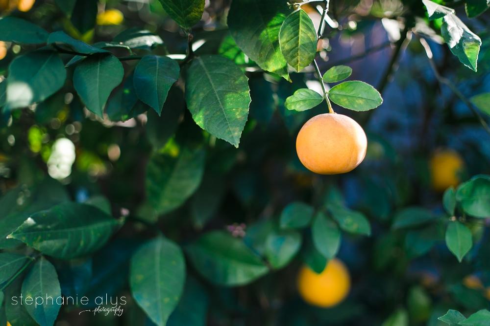 © 2016 Stephanie Alys Photography » Lemonade