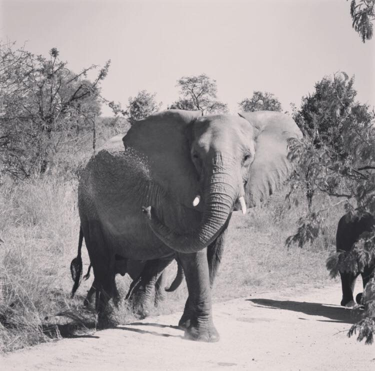 South Africa_Elephant.jpg