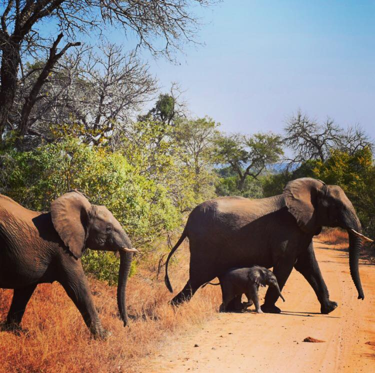 South Africa_Baby Elephant.jpg