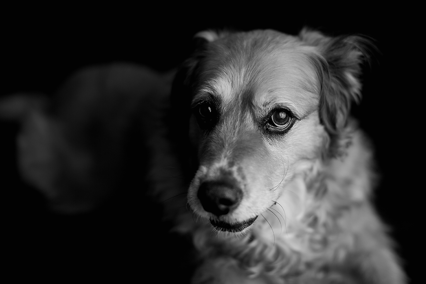 orange-county-child-dog-photography-studio-black-and-white-portraits.jpg
