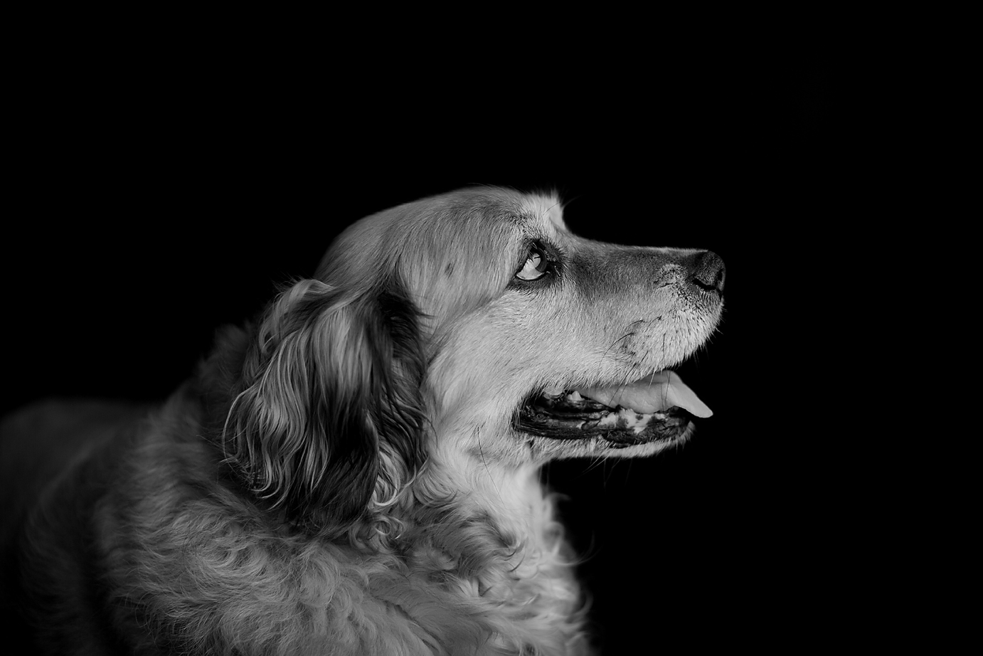 orange-county-child-dog-photography-studio-irvine-simple-black-and-white-portraits.jpg