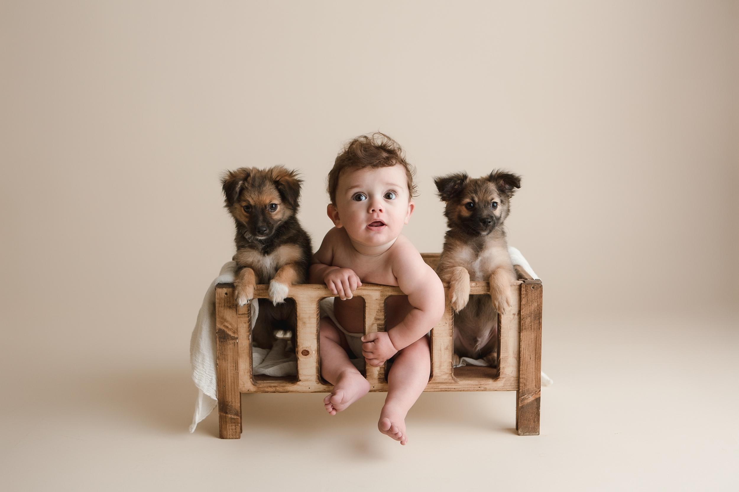 puppies 19.jpg