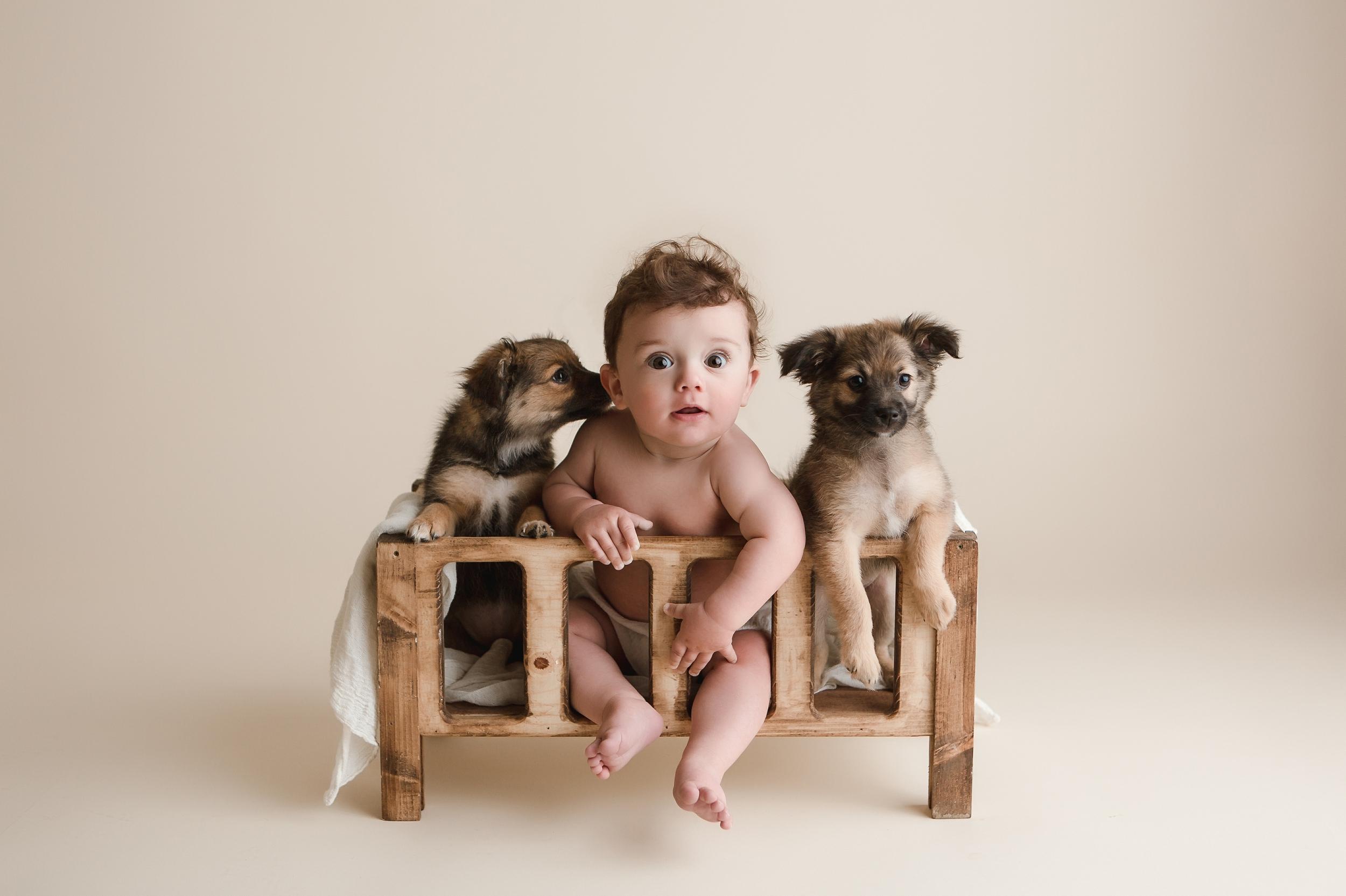 puppies 17.jpg