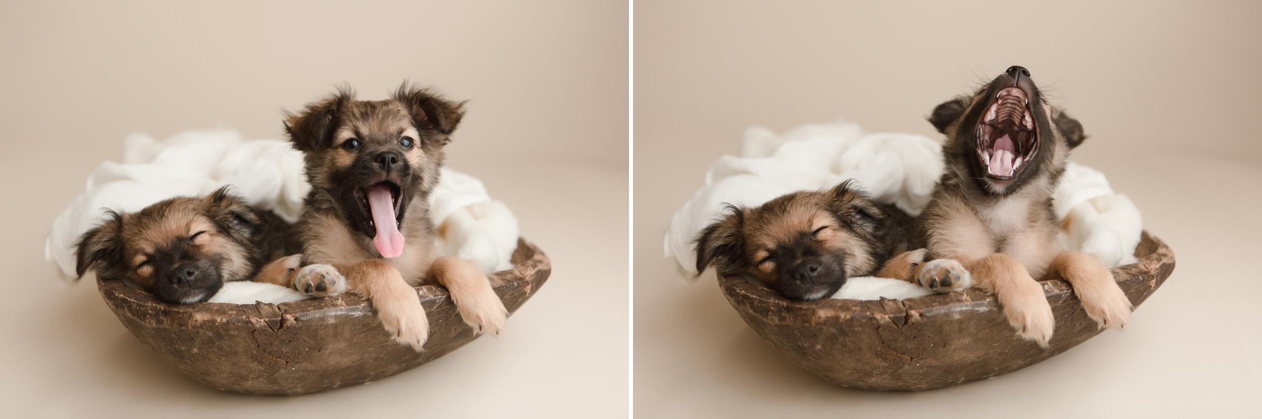 puppies 12.jpg