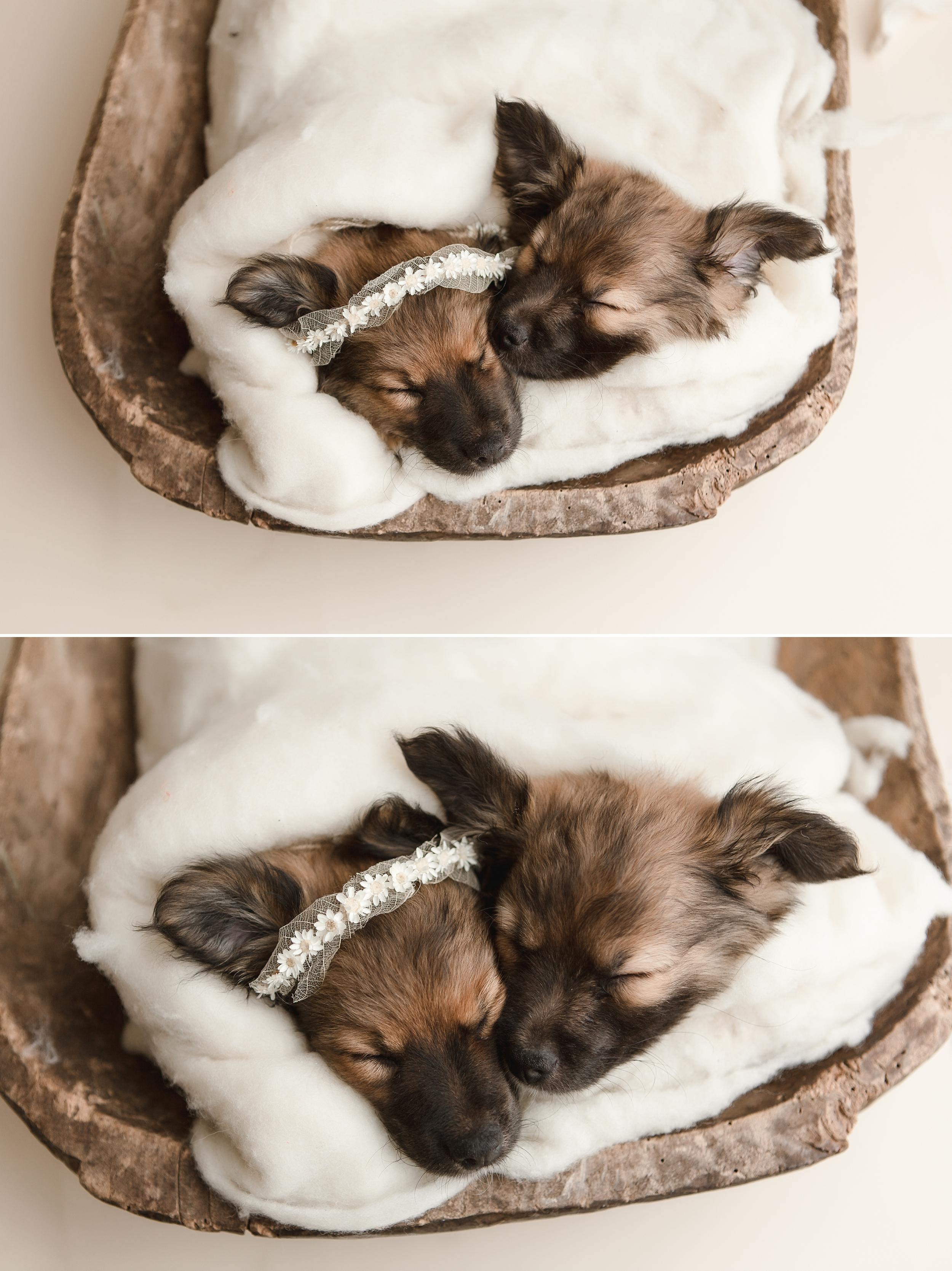 puppies 7.jpg