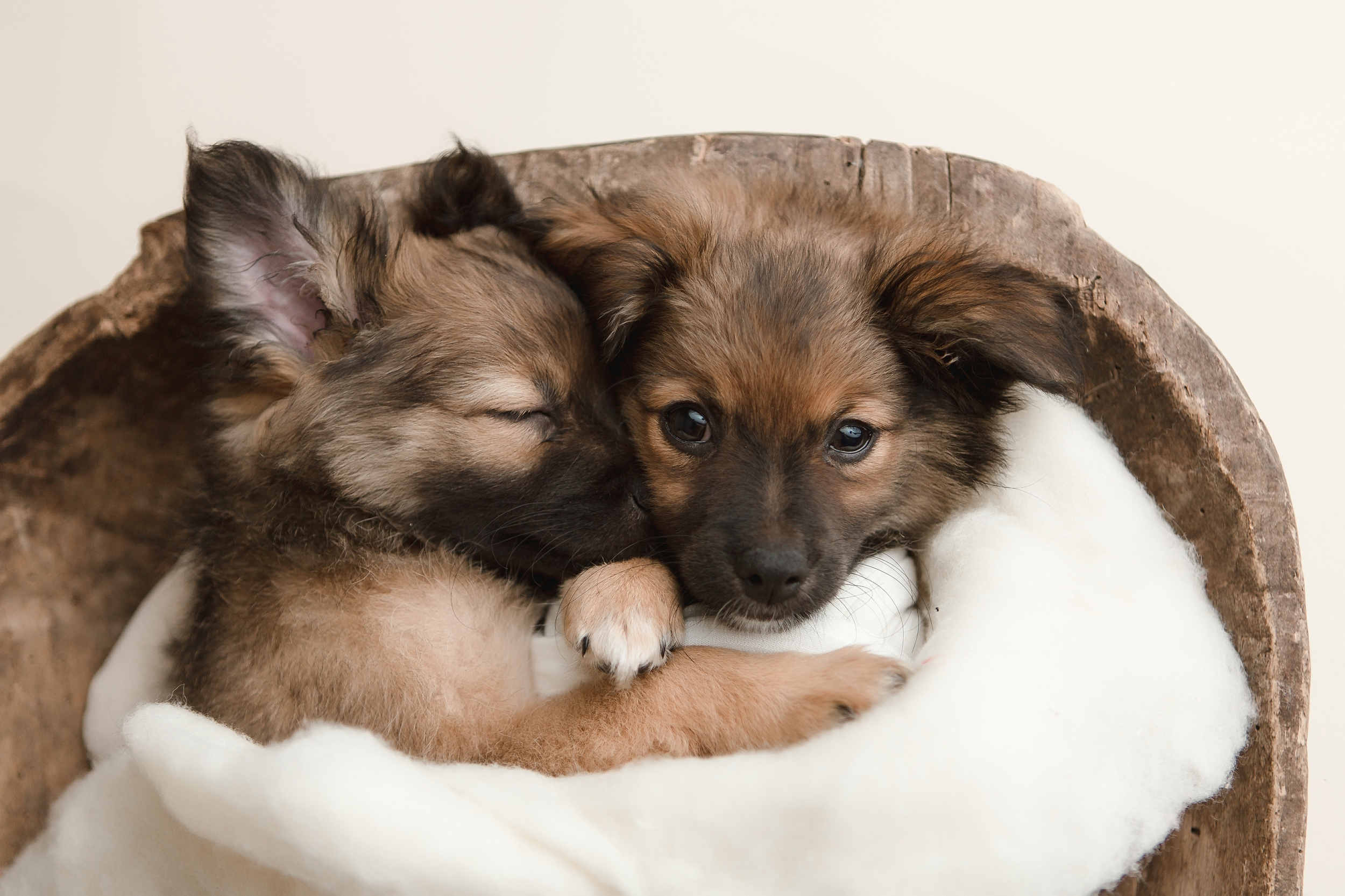 puppies 5.jpg