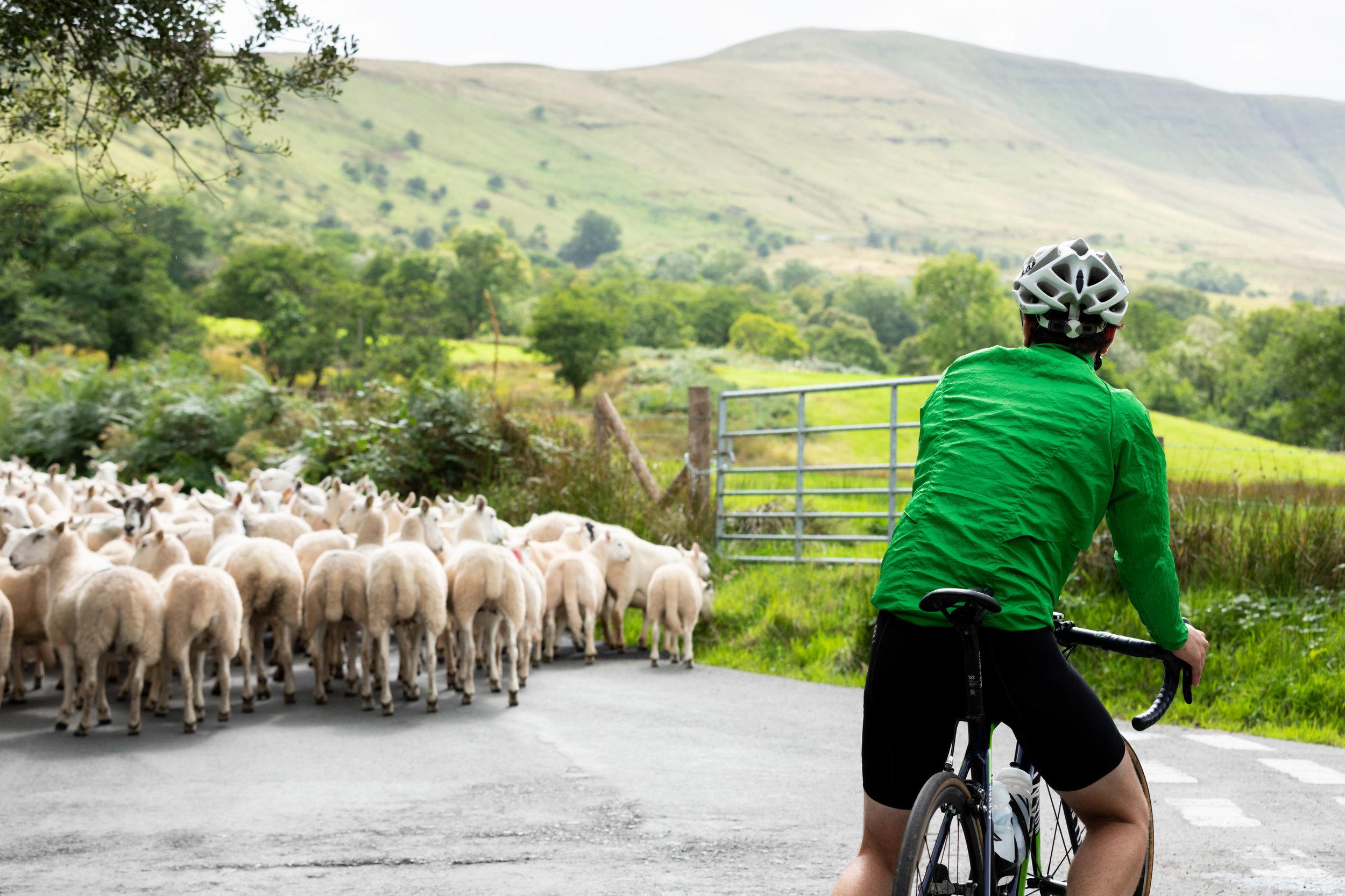 BenReadPhotography_Cyclist_Wales-96.jpg