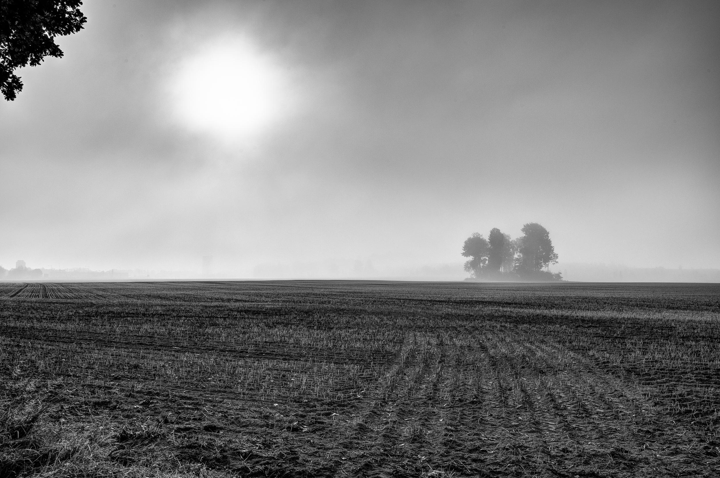 Misty Morning by Uffe Lundgren