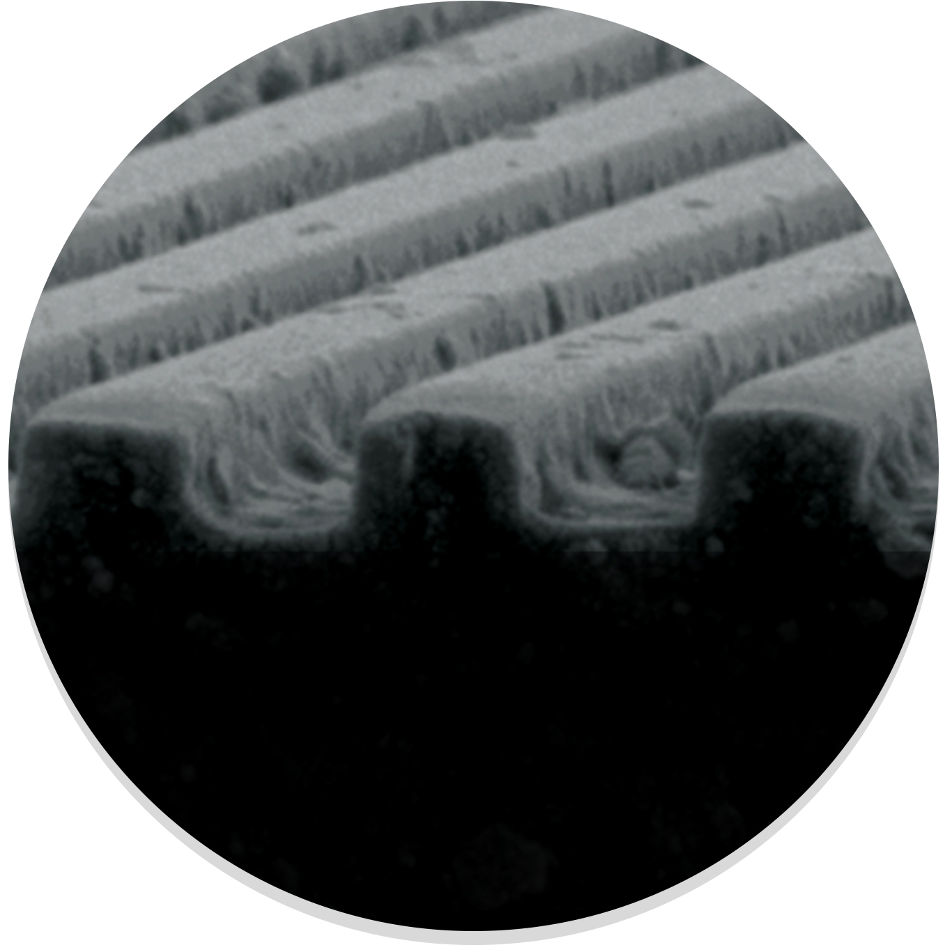 SEM Micrograph of NanoSurface Topography