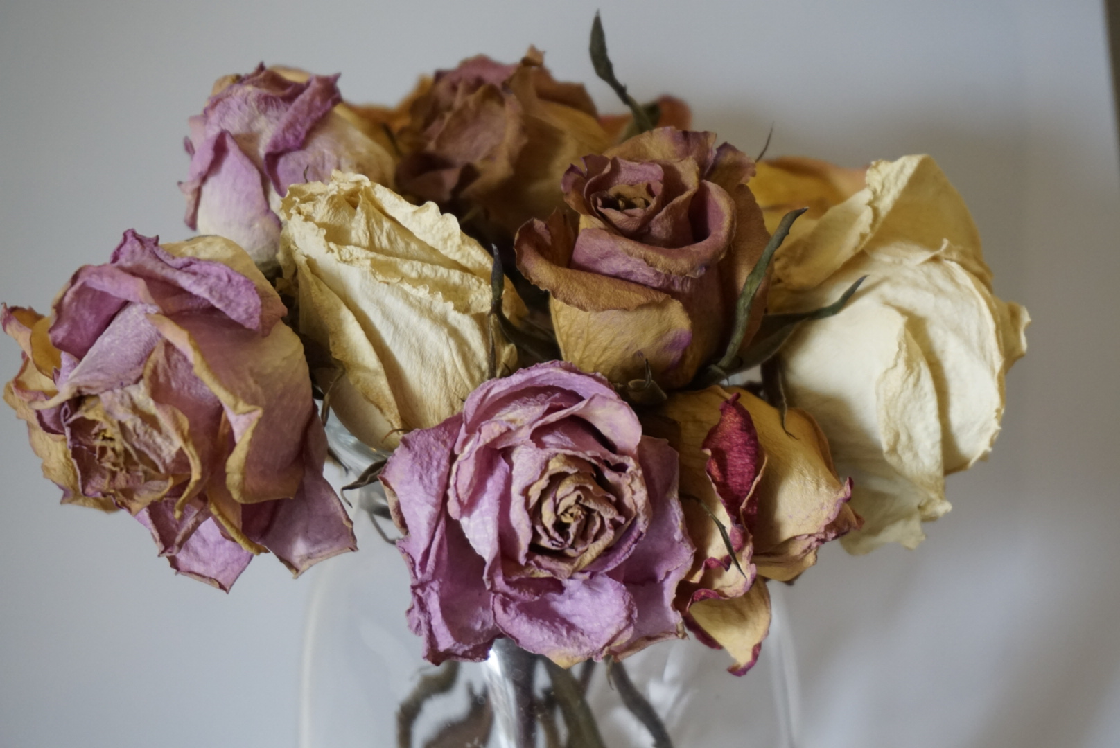 I love the colors of these dead flowers