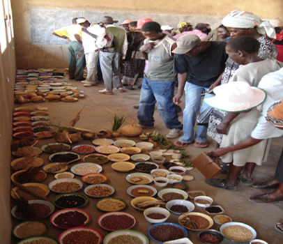 Figure 2 & 3:  Seed fair and seed banking at community level in Mtoko District, Zimbabwe