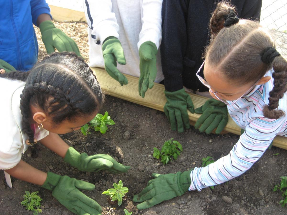 Isles - School Gardens