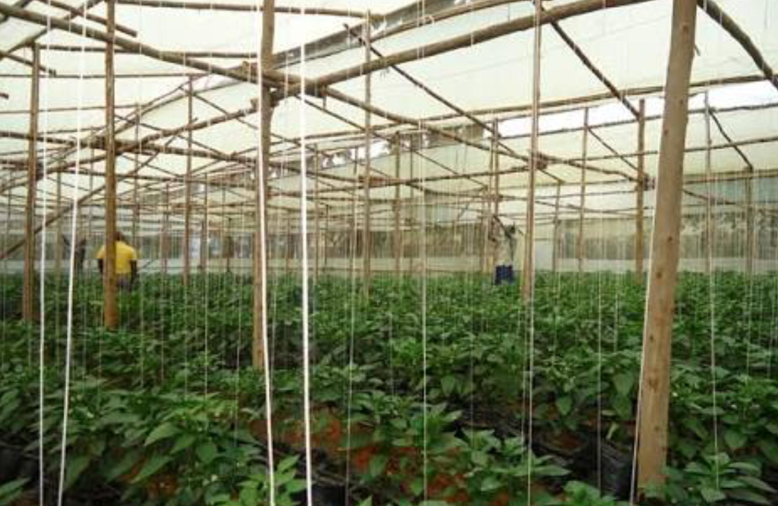 Greenhouse farming in Tanzania — Nudge Sustainability Hub