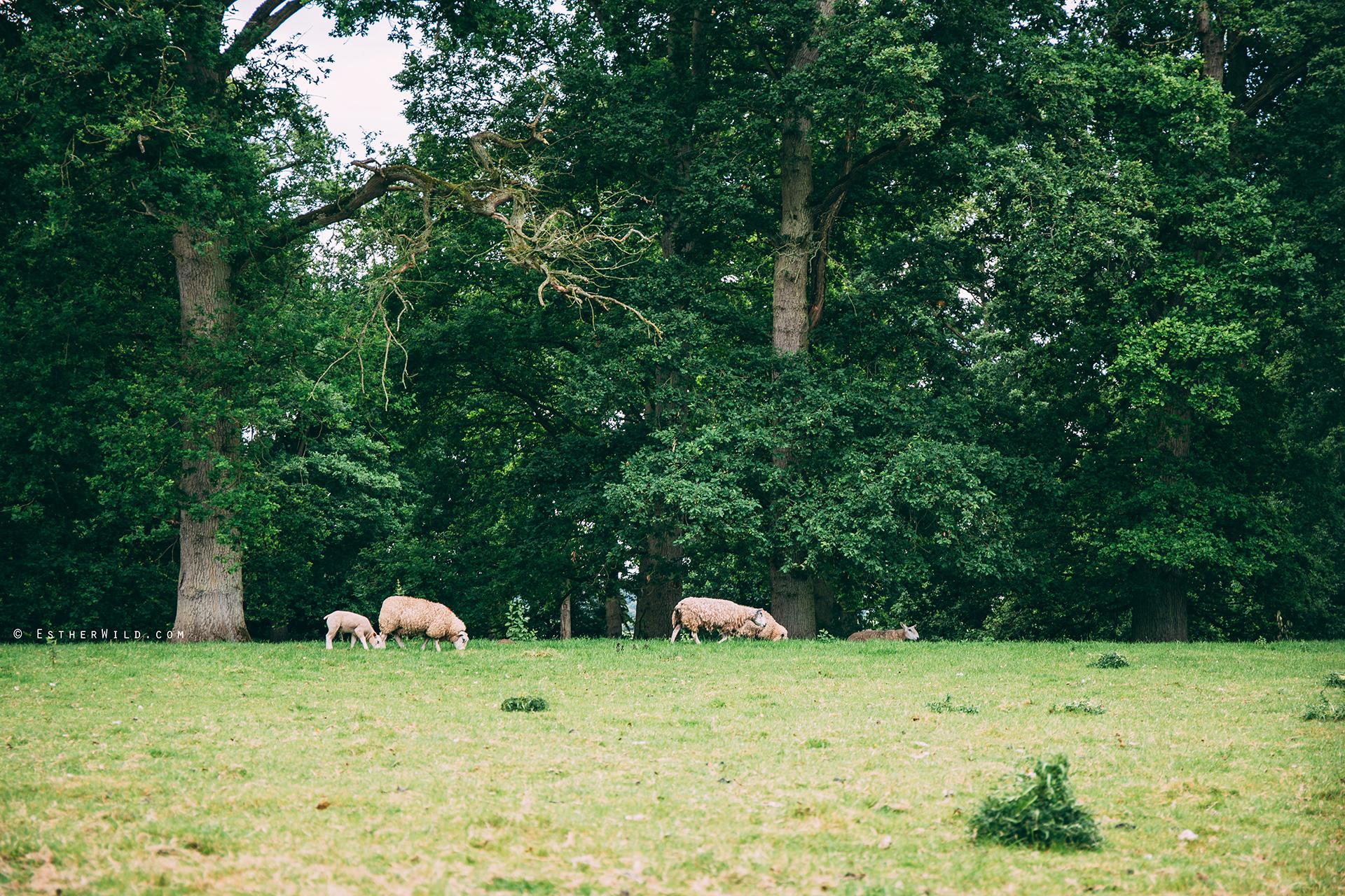 Norfolk_Wedding_Photographer_Mannington_Hall_Country_Esther_Wild_9932.jpg