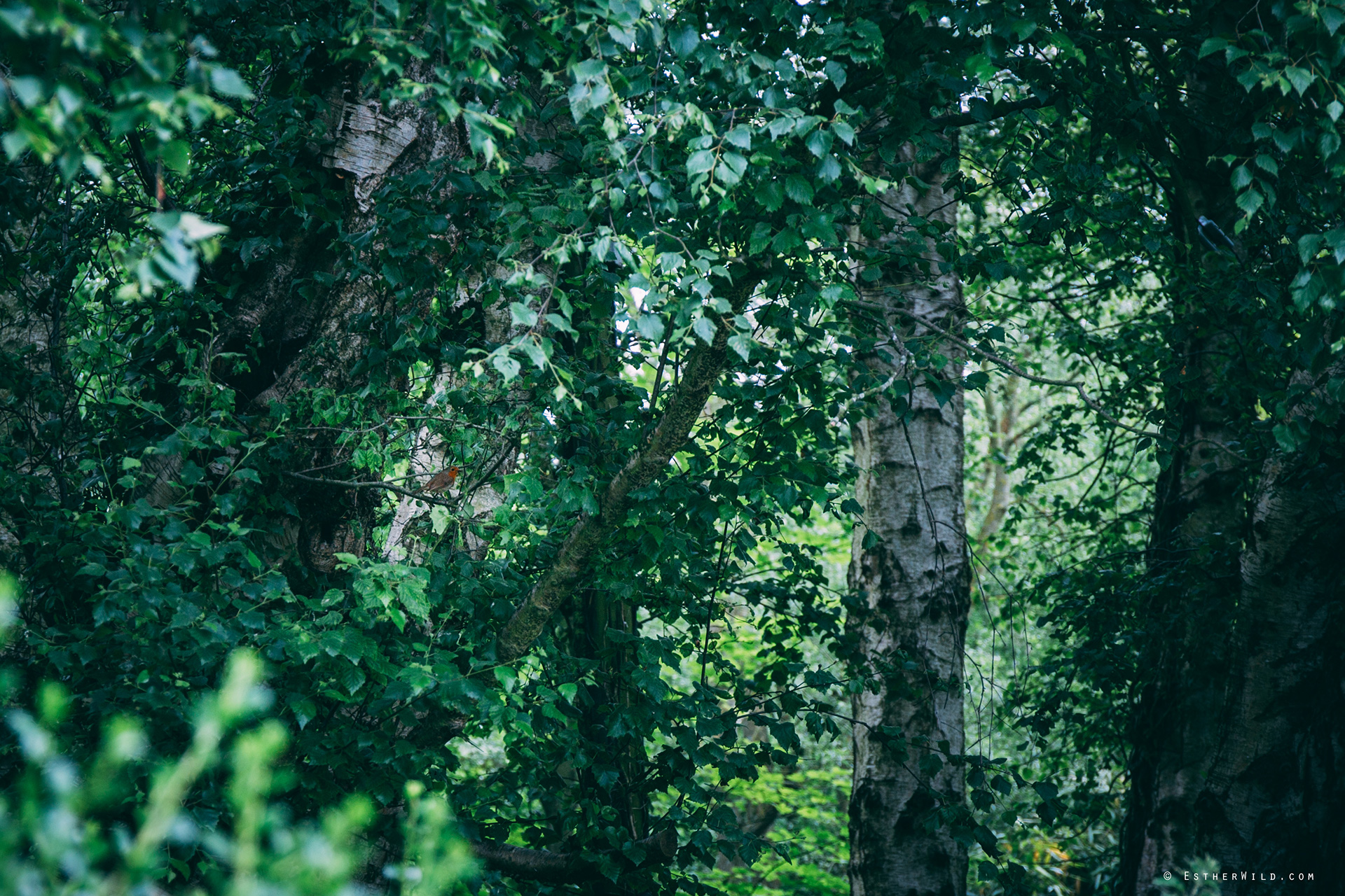 Norfolk_Wedding_Photographer_Mannington_Hall_Country_Esther_Wild_9934.jpg