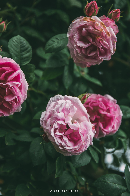 Norfolk_Wedding_Photographer_Mannington_Hall_Country_Esther_Wild_0093.jpg