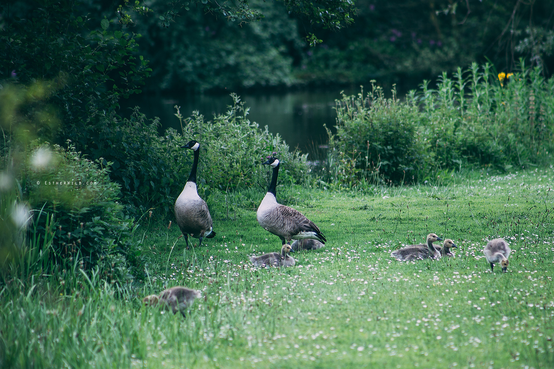 Norfolk_Wedding_Photographer_Mannington_Hall_Country_Esther_Wild_0679.jpg