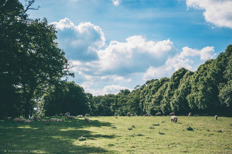 0617_Mannington_Hall_Gardens_Wedding_Photography_Esther_Wild_IMG_1738.jpg