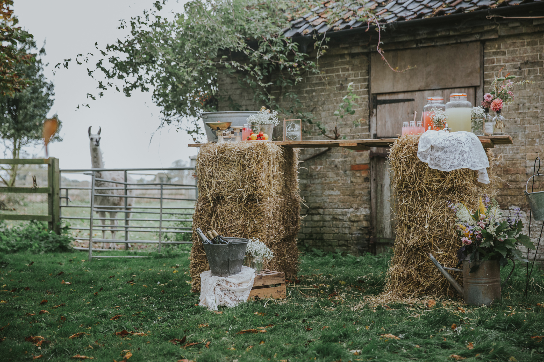 Esther_Wild_Little_Horse_Box_Norfolk_Wedding_IMG_2723.jpg